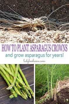 garden care vegetable This is a step-by-step picture tutorial on how to plant asparagus crowns and grow asparagus for years. Well go over how to plant asparagus crowns, how to care for your asparagus plants, and how to harvest asparagus. When To Plant Asparagus, Planting Asparagus Crowns, Asparagus Garden, How To Cook Asparagus, Grow Asparagus, Growing Asparagus From Seed, Raised Vegetable Gardens, Vegetable Garden Design, Gardens
