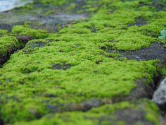 Kolkata Moss @ Wall