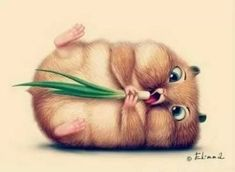 Image result for cute animal drawings with color