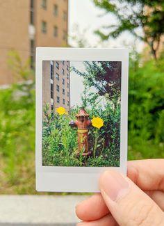 Saturday yellow flower by Xiaoyu Chen / 500px Instax Camera, Fujifilm Instax, Instant Print Camera, Card Sizes, Yellow Flowers, Chen, Prints