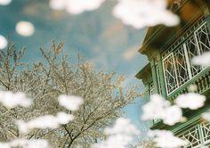 Sakuramadelica 2013 #06 by Takeshi Suga