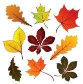 Reeks van kleurrijke herfst bladeren voor uw ontwerp stock photography