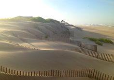 Sand Dunes in Nags Head, NC by Pajamie