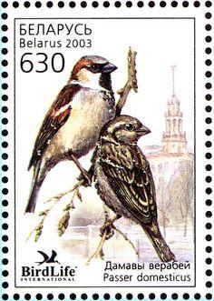 Birds on stamps: Belarus Bielorussie