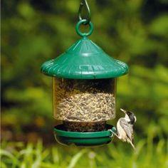 Great Kiskadee Smaller Birds Pinterest