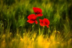 A Minuscule World by Olivier Rentsch on 500px