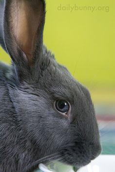 14 Best Jack Rabbit Images On Pinterest Jack Rabbit Bunny And Rabbits