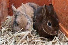 Свободно зайче или зайче в клетка?