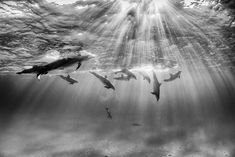 Picture of dolphins swimming in Bimini, Bahamas Animal Photography, Amazing Photography, Nature Photography, Black Photography, Photoshop, Animals United, Dolphin Photos, Underwater Images, National Geographic Travel