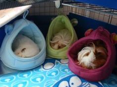 Piggy beds!