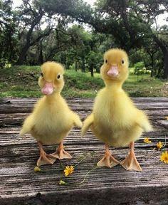 Сестричка и братик! - юрий водопьянов - Google+