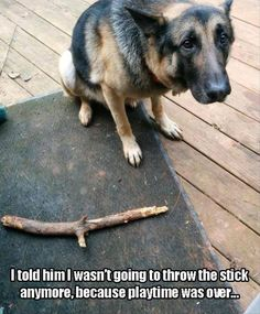 Funny Animals of The Day 20 Pics - AWW - - Here is todays 20 funny animals pictures enjoy; The post Funny Animals of The Day 20 Pics appeared first on Gag Dad. Cute Funny Animals, Funny Animal Pictures, Funny Cute, Funny Dogs, Funniest Pictures, Hilarious, Funny Photos, Funny Kittens, Animal Pics