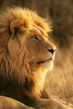 Tweet us about your experience with the King of the Jungle! @African_Impact
