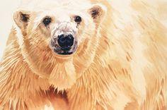"""Hope"" Polar Bear Wildlife Watercolor Art by Paul Jackson"