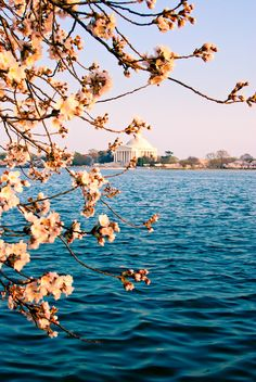 DC - should be living there in about a year and half