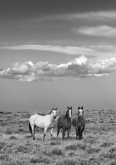 Three Amigos-I was driving down a long winding gravel road along the Missouri river one evening when I looked off to the north and saw three horse standing in the neatest way. The clouds weren't quite right from my position so I maneuvered around to the west and wouldn't you know, the horses never moved. They allowed me to capture a great image. North Eastern Montana.
