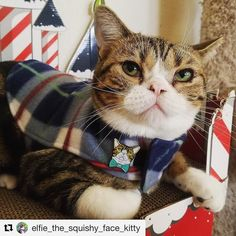 #Repost @7deadlypins  Have you seen how handsome Elfie is rocking his own pin?! Special thank you to @elfie_the_squishy_face_kitty for making this possible! . You can still pick up an Elfie pin for you and all your cat friends in our shops! $2.00 from EACH SALE goes towards helping @project_feral and all they may need . Visit our shops: 7deadlypins.etsy.com 7deadlypins.storenvy.com Link to the storenvy shop is in our bio . . . . . . . #7deadlypins #lapelpin #pin #enamelpin #pinbadge #pingame…