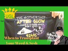 When to Transplant Cannabis Plants -  https://i4.ytimg.com/vi/_EAVaJhslXk/hqdefault.jpg - http://tokenbudz.com/2017/01/18/when-to-transplant-cannabis-plants/