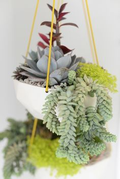 Tips on Succulents | Cupcakes & Cashmere