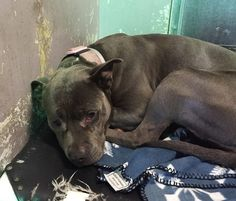 2/9/16 STILL THERE!!! Dog picked up as a stray has lost hope of ever going home