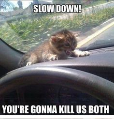 Slow Down You're Gonna Kill Us Both - Funny Animals with Captions LOL