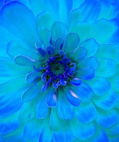 Turquoise Flowers   painting of a turquoise flower by lilla frerichs