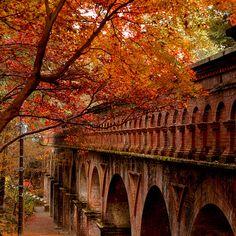 Autumn Arches #kyoto #japan