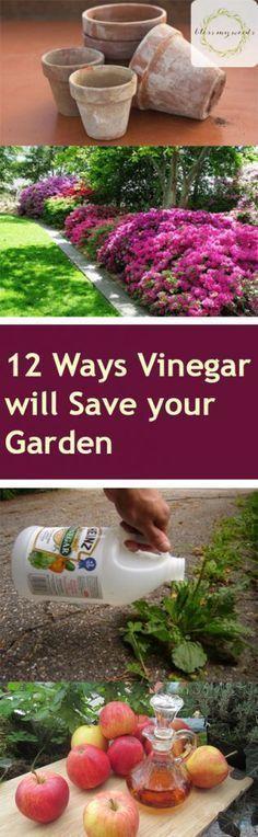 Gardening, Gardening Projects, Gardening 101, Gardening Hacks, Gardening Tips, Gardening With Vinegar, How to Use Vinegar in The Garden, Gardening TIps and Tricks, Gardening for Beginners, Popular Pin #gardeningforbeginners