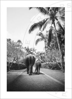 Love Warriors Adorable Friends Elephant Walk