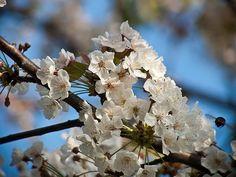 Beneficios de la miel de manuka para la piel La miel de manuka es una miel floral que proviene del néctar de un arbusto criado en Nueva Zelanda, la cual se puede utilizar tanto interna como externamente; es un agente efectivo contra un amplio espectro de organismos infecciosos, incluyendo bacterias, virus y hongos; así como protozoos y bacterias.