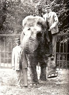 old elephant postcard Cincinnati Zoo