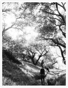 Trees, trees, trees. <3