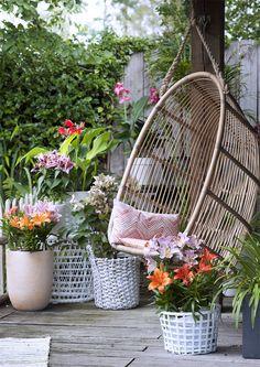 Ein gemütkliches Ambiente im Garten. #pflanzenfreude