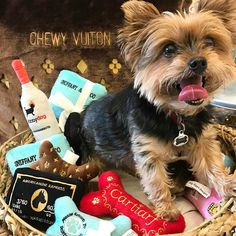 Our friend Charlie is ready for #sundayfunday with a basket full of our favorite puppy toys from @dogdiggindesigns! We love our four-legged friends!! #tfssi #stsimonsisland #seaisland #goldenisles #puppylove #dogdiggindesigns #puppytoy #fourleggedfriends