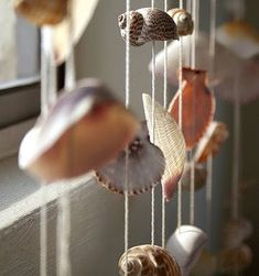 seashell window treatment
