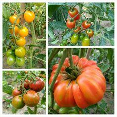 Juliol 2016 Hort del Garden