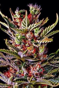 That is a beautiful bud