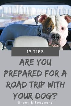 Road Trip With Dog, Moist Carrot Cakes, Homemade Dog Treats, Dog Care Tips, Dog Boarding, Dog Training, Best Dogs, Health And Wellness, Personality