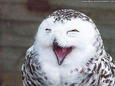 Super Happy Owl Funny Wallpaper