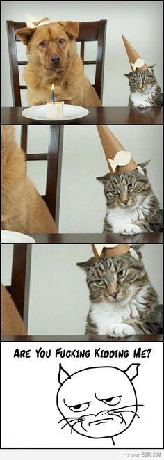 He he he, oh Kitties!