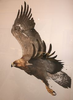 Karl Martens, Golden Eagle | Cricket Fine Art                                                                                                                                                      More