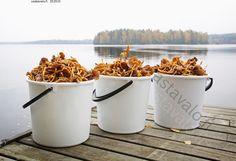 Melkein paljon - suppilovahvero Vastavalo.fi Birches, Seas, Finland, Fresh Water, Autumn, Drink, Food, Beverage, Fall Season