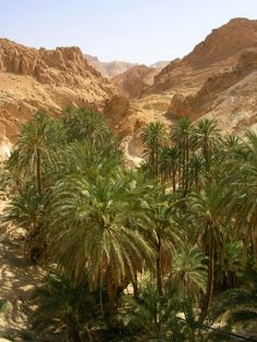 tunisie oasis - Cerca con Google