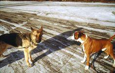 Calming signals, photos - Turid Rugaas - International Dog Trainer