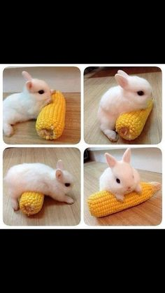 Is this little guy a lil' bit corny?