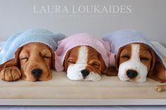 EDITOR'S CHOICE (04/10/2015) The Sleeping Puppies by Laura Loukaides View details here: http://cakesdecor.com/cakes/191222-the-sleeping-puppies