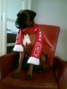 Fc Twente fan