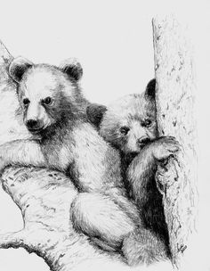bear sketches | Beth Dix Art...embroidery and quilting!: Pencil sketch of bear cubs