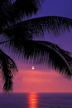 Beautiful tropical sunset at Kealakekua Bay on the Kona coast of Hawaii destination. I'm thinking Palm trees, ocean breeze and 80 degrees