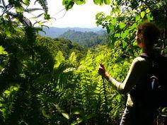 noch unerschlossene Wälder auf einer unserer Sao Tomé und Principé Reisen.